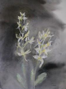 Valkolehdokki (2007, akvarelli ja öljypastelli)